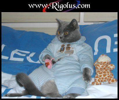Chats rigolos page 4 - Images de chats rigolos ...
