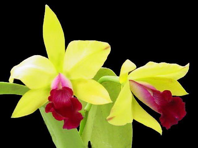 orchidee pour tout les mamans du monde - page 3