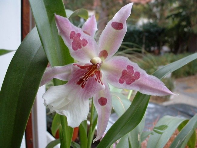 orchidee pour tout les mamans du monde - page 2