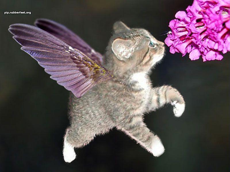 Chats rigolos - Images de chats rigolos ...