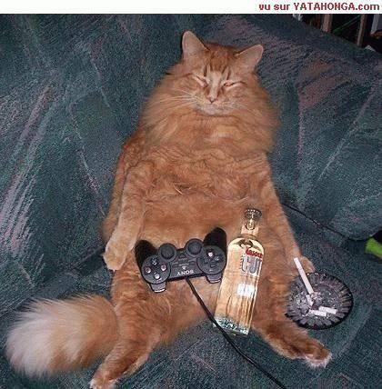 Chats rigolos - Dessins de chats rigolos ...